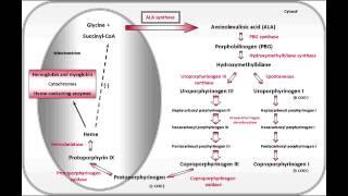 Acute Intermittent Porphyria & Porphyria Cutanea Tarda