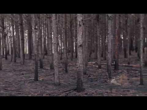 Pine Straw Baling on Pine Plantations