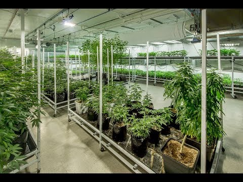 How to become a licensed commercial cultivator | Cannabusiness Live | Episode #15