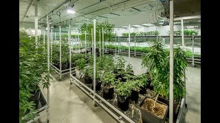 How to become a licensed commercial cultivator   Cannabusiness Live   Episode #15
