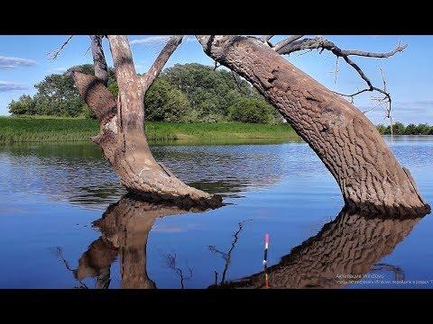 КРУПНЫЙ КАРАСЬ ИЗ ПОД ЗАТОПЛЕННОГО ДЕРЕВА!!Рыбалка 2019, карась с лодки. ловля на удочку.лужа