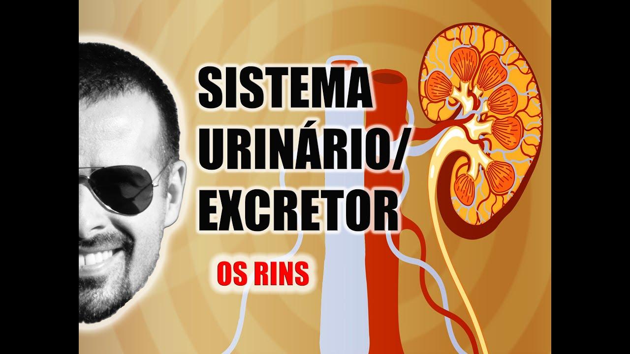 Favoritos Sistema Excretor/Urinário - Os Rins e a filtragem do sangue  NN93