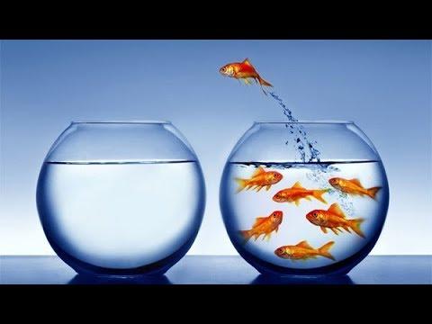 Define your Success   Successful vs Unsuccessful   Motivation