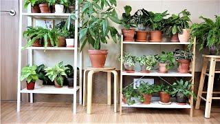 실내 독소를 제거하는 식물 14가지