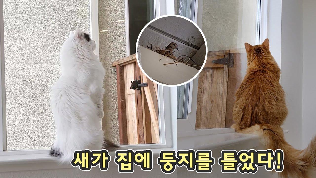 집에 새 친구가 나타나서 둥지를 만들었다! 고양이가 그걸 찾아냈습니다