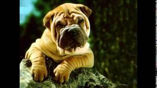 сухой корм для собак марки(, 2014-10-20T17:51:49.000Z)