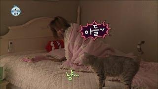 Video 【TVPP】Hyorin(SISTAR) - Aegyo for Cats, 효린(씨스타) - 아들~ 잘 잤쪄? 어디에서도 볼 수 없었던 효린의 폭풍 애교 @ I Live Alone download MP3, 3GP, MP4, WEBM, AVI, FLV Juli 2018