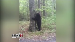 Bear sightings continue across Connecticut