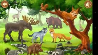 Развивающие видео.Животные леса.