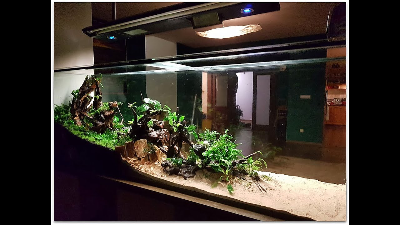 Aquascape Planted Tank: How to Setup 550l Tank - YouTube