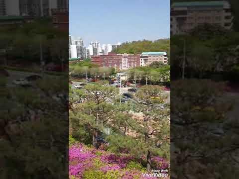 Musim Semi Korea Selatan