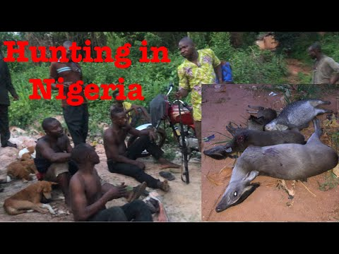 How to hunt bushmeat – Nigeria hunters hunting bush meat