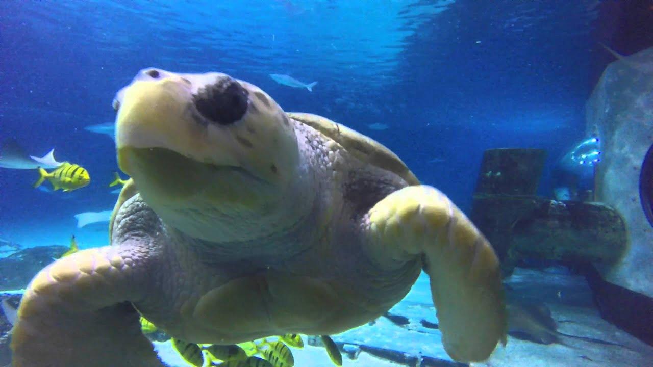 Adventure Aquarium, NJ 2016 - YouTube
