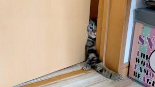 寝室のドアを開けたら寂しがり屋の猫が待機していてこうなりましたw