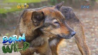 Born to Be Wild: Canine Distemper outbreak in Camiguin Norte