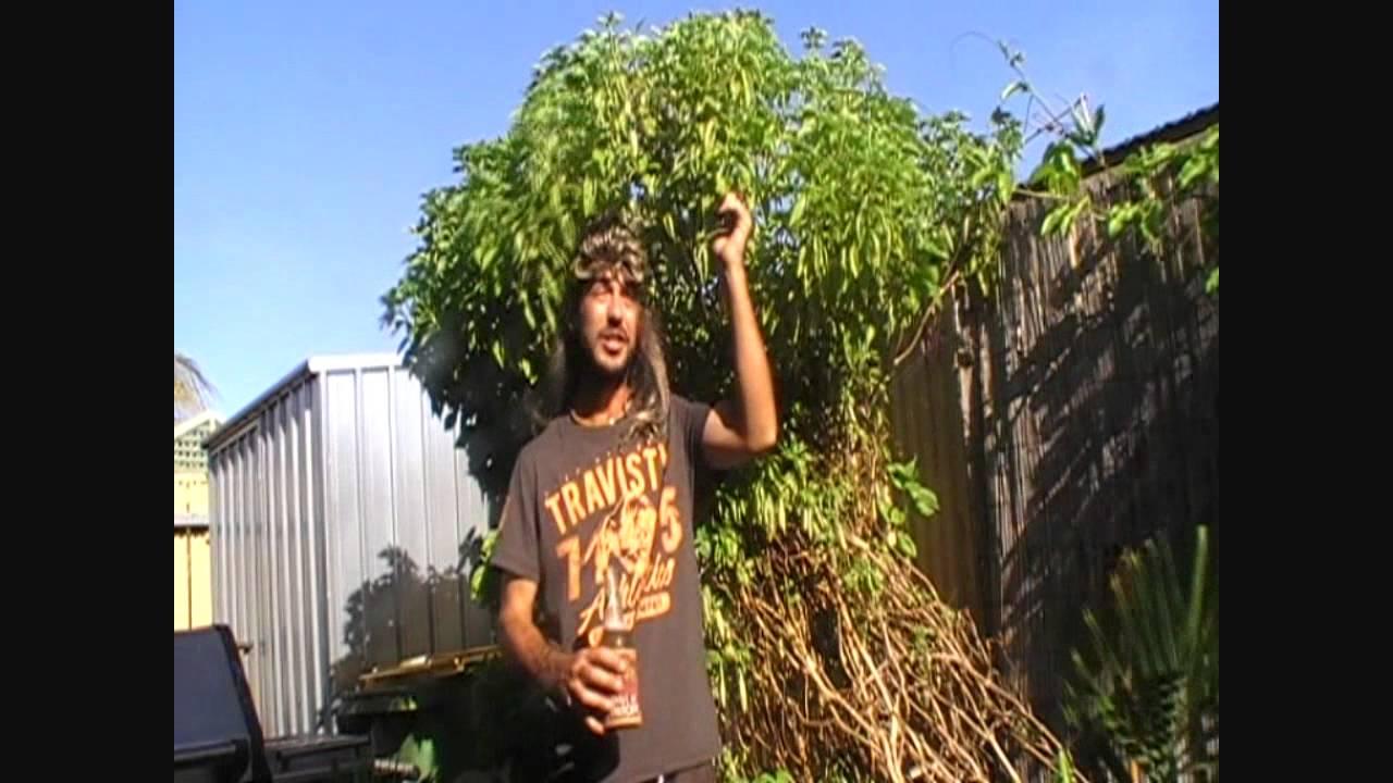 How do you plant basil?