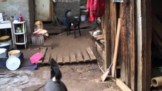 самара приют для бездомных животных участие 3)