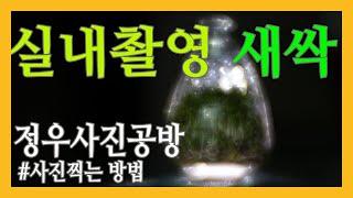 실내촬영/새싹/유리병/조명사용하기/스트로보