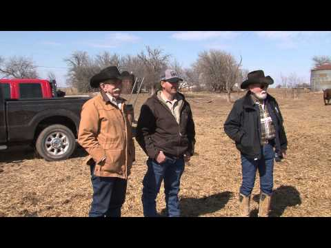 The American Rancher - featuring Braunvieh Cattle / When Profit Matters