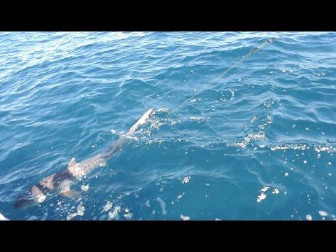 Hook Up With A Tiger Shark At Direction Bank Perth WA
