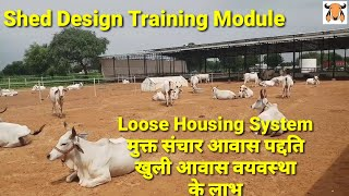 Loose housing system for cows।shed design।मुक्त संचार आवास पद्दति