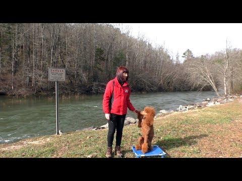 Dog Training Standard Poodle Blairsville GA Off Leash