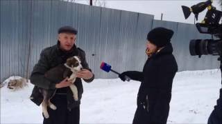 Щенок метис зенненхунда едет домой. 28.12.2014