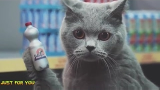 Cats Shopping - Funny Cat Compilation TV COMMERCIAL [Mr State]