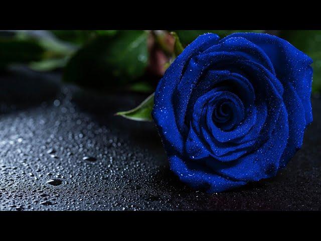 Blue Rose - by Roberto Manzoli