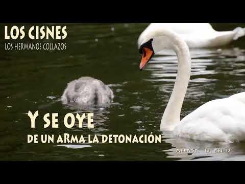 Los cisnes - Los Hermanos Collazos (Letra)