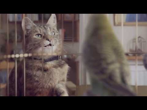 Cat and Budgie (ORIGINAL UNCENSORED AUDIO) - Freeview Ad (Parody) - #catandbudgie