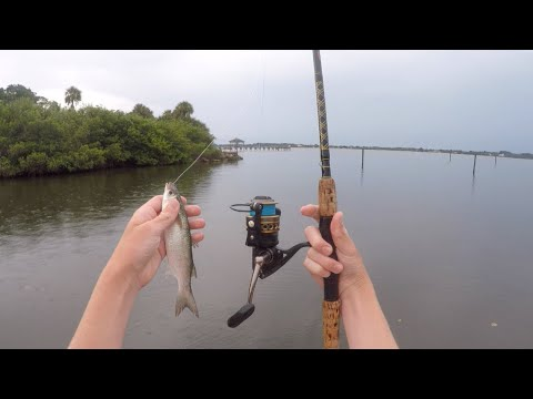 Indian River Snook, Tarpon, And Trout