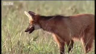 Weird & Wonderful Animals -Wild South America - BBC