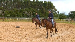 Para cavalos charley evitar exercícios