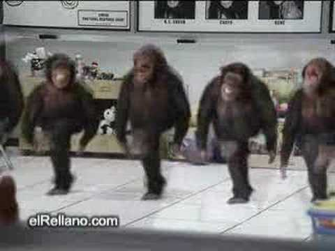 Riverdance chimps