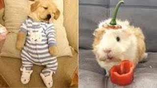 cute cats and kittens doing funny things 2019 funny cats and dog
