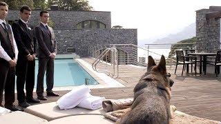 Dieser Hund hat 100 Millionen Dollar. Der reichste Hund der Welt!