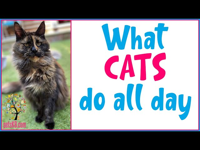 How much do cats sleep each day? A day in the life of a cat