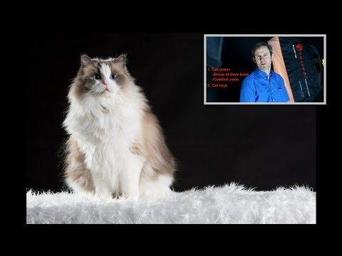 How to Photograph Cats in Basement Studio Tips on Camera Settings, Behaviour and Lighting