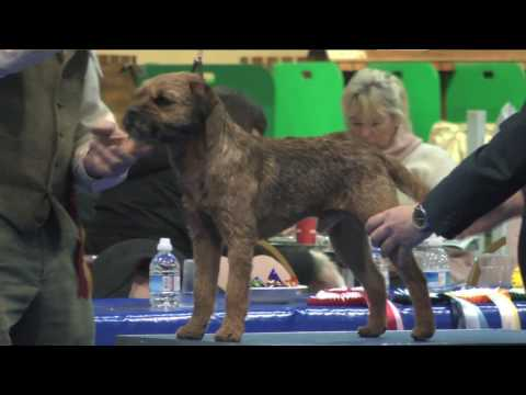 Manchester Dog Show 2017 - Terrier group FULL