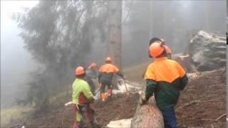 Baum fällt mit hydraulischem 20t Fallheber - Tree falls with hydraulic felling lifter (20t hoist)