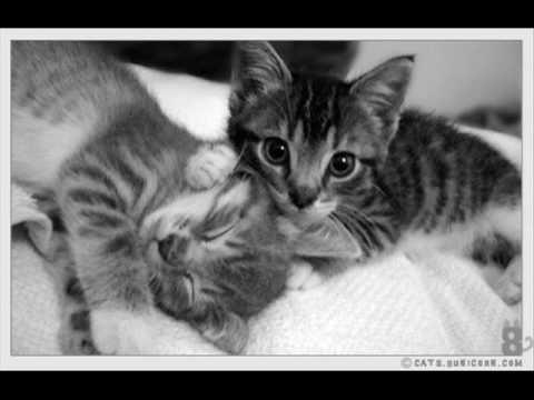 Gatitos Enamorados Youtube