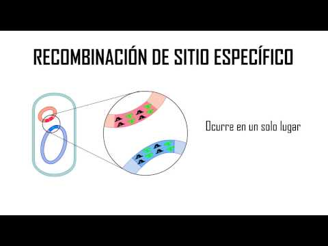 Specific Site Recombination