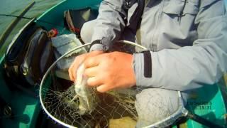 ловля судака на ридж