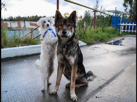 Reymand and Vixie. Dog tricks