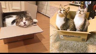 猫ちゃんってダンボールと猫鍋どっちが好きなの?!仕草も可愛い♡~Whic...