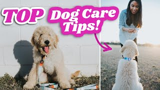 5 Things You NEED to do for your Dog!  My brutally honest opinion & pet hacks