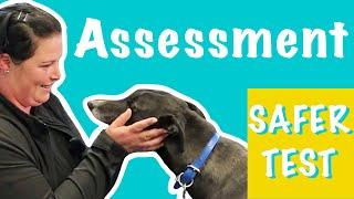 Assessing a Greyhound: how to do a SAFER test