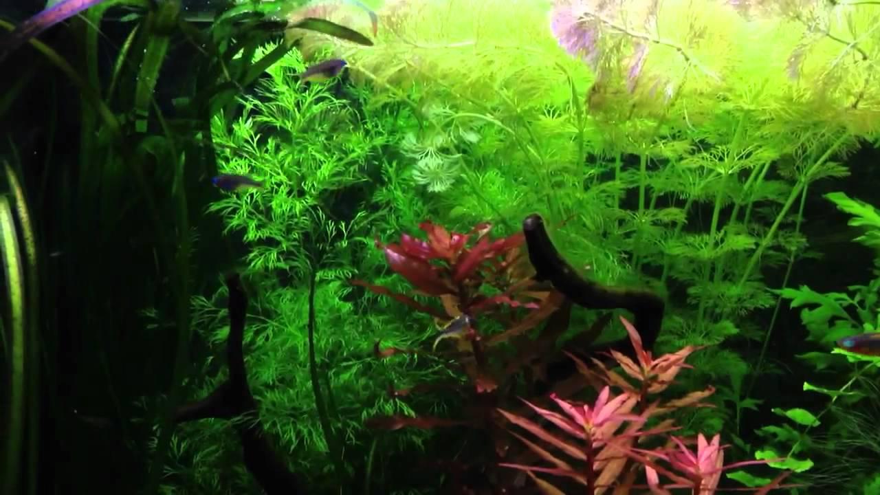 pflanzen aquarium 540l youtube. Black Bedroom Furniture Sets. Home Design Ideas