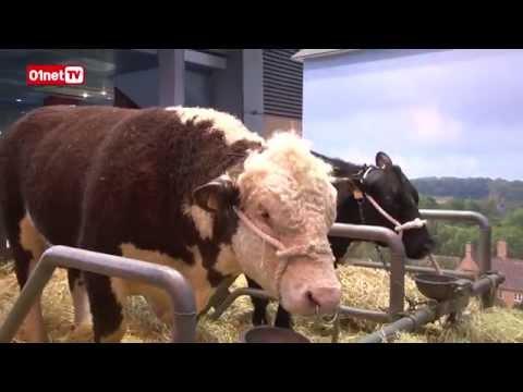 Salon de l'agriculture : vaches connectées et salades high-tech